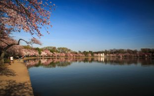 Tidal Basin Refelection