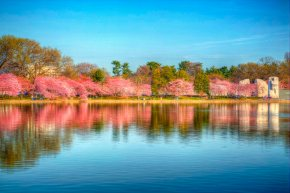 Cherry blossoms – part 4 of 4(HDR)