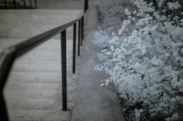 Infrared Flowers & Stairs
