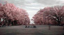 Infrared Park v1