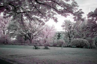 Infrared Park Field