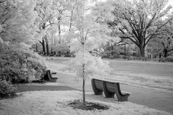 Infrared Park Bench B&W