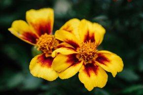 More flowers (VSCO)