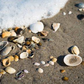Seashells by theSeashore