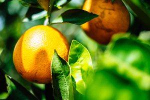 Big Oranges