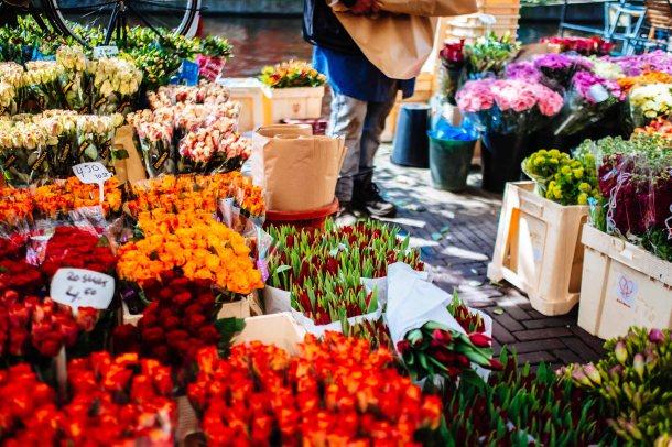 Flowers in Leiden