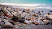 Haitian Sea Shells